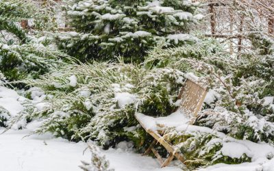 6 Winter Landscaping Ideas